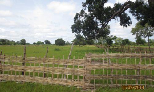 Périmètre de reboisement compensatoire financé par le projet de la RN6 à Kabendou
