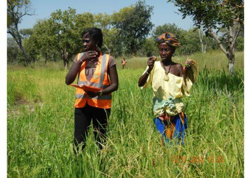 Projet MCA-Réhabilitation de la RN6- Appui des femmes de Kounkané au maraîchage